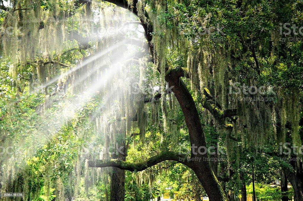 beam of light and tree stock photo