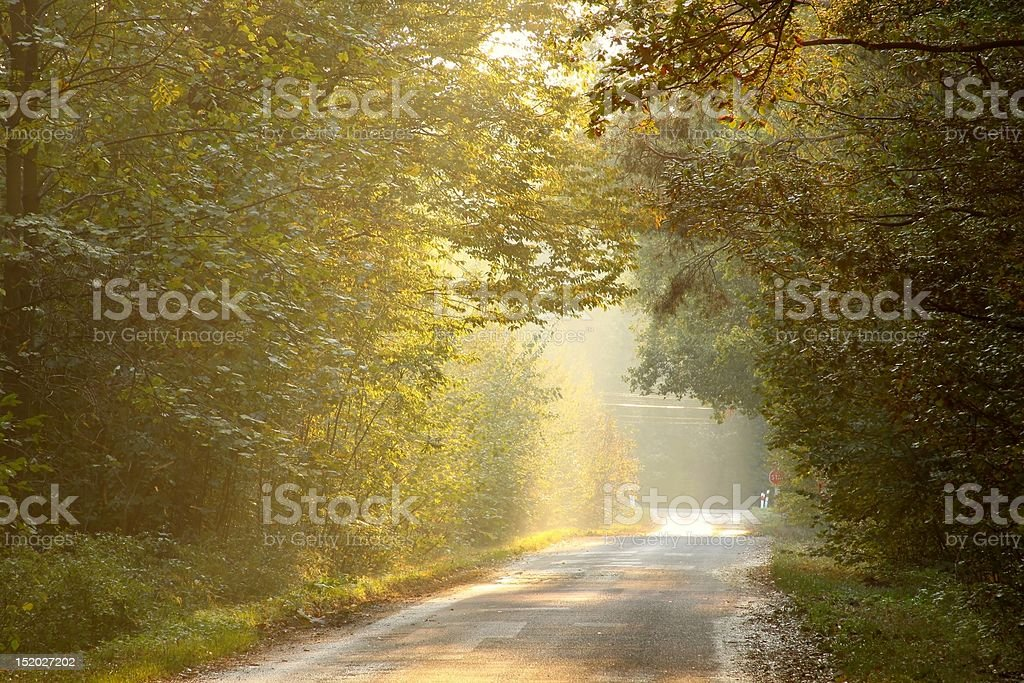 Beams of sunset falls on the country road royalty-free stock photo