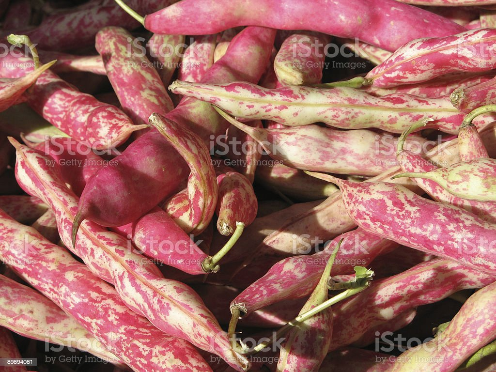 Bean Pods royalty-free stock photo