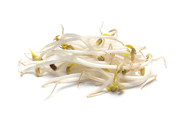 Bean Sprout stock photo