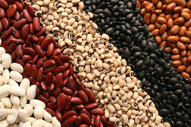 Beans diagonals stock photo
