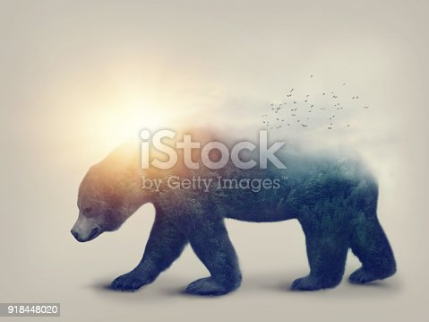 istock Bear and forest 918448020