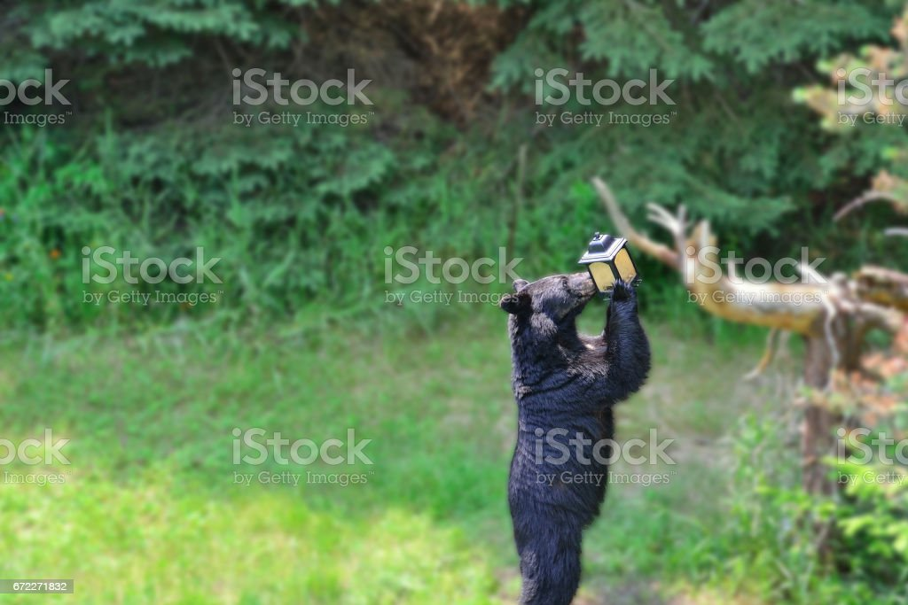 Bear at Bird Feeder stock photo