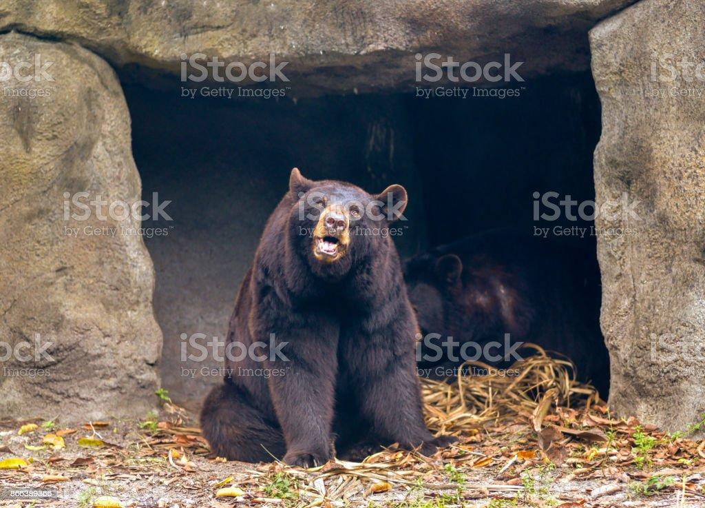 Bear, Bear stock photo