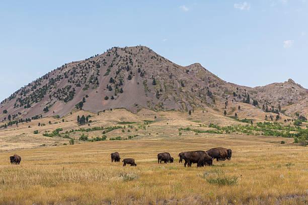 Bear Butte stock photo