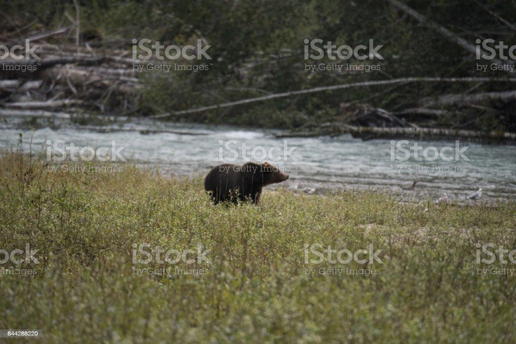 Bear Country stock photo