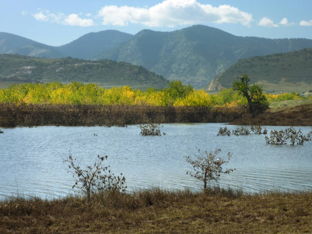 Flooded Bear Creek Lake with yellow 'chocolate dipped' trees.