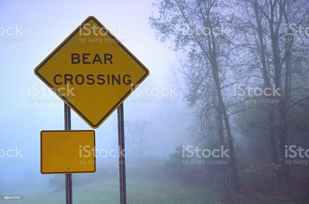 Bear Crossing stock photo