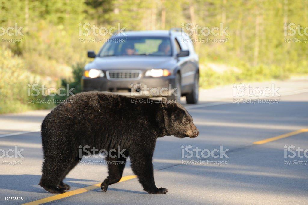 Bear Crossing Road stock photo