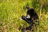 ゴミ ペットボトルを噛んで子熊します。