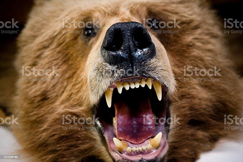 Bear Face And Teeth stock photo