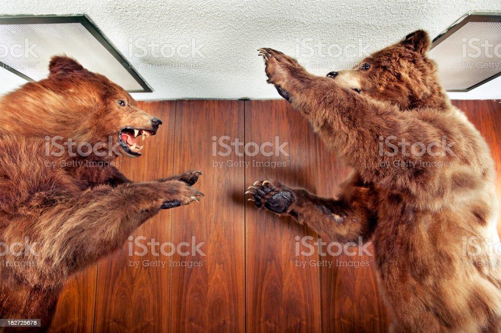Bear fight! royalty-free stock photo