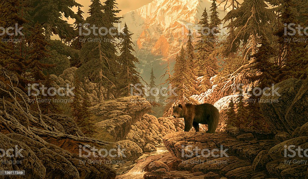 Bear in the Rocky Mountains stock photo