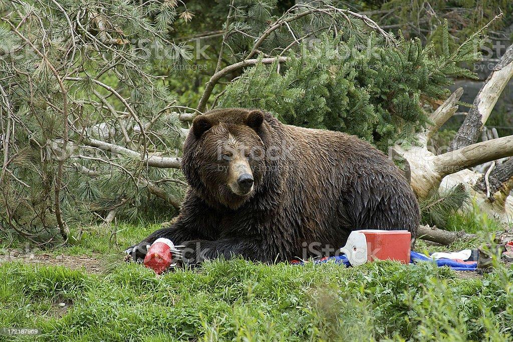 Bear invadere campeggio - foto stock