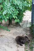 Bear is symbol of Bern city in Switzerland.