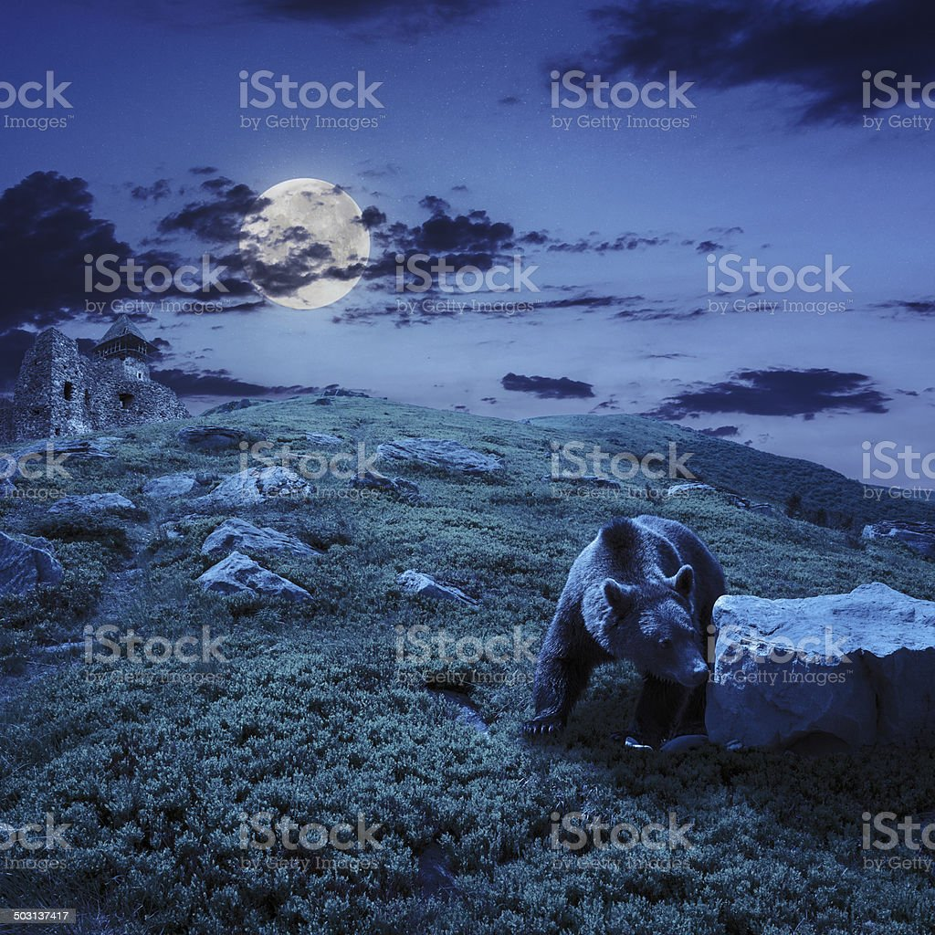 bear near the castle on hillside at night stock photo