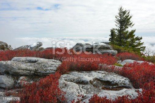 istock Bear Rocks of Dolly Sods Wilderness 174981775