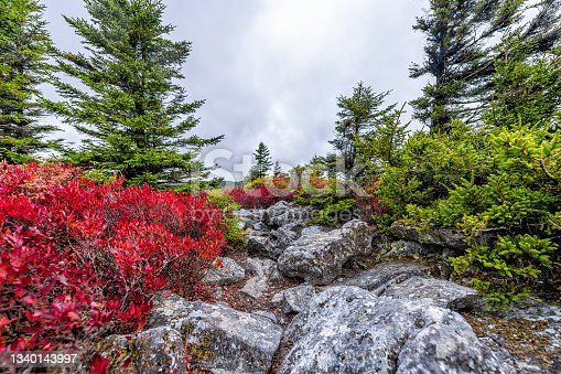 istock Bear rocks peak in autumn fall season with rocky landscape in Dolly Sods, West Virginia with red wild blueberry bushes and colorful spruce trees 1340143997