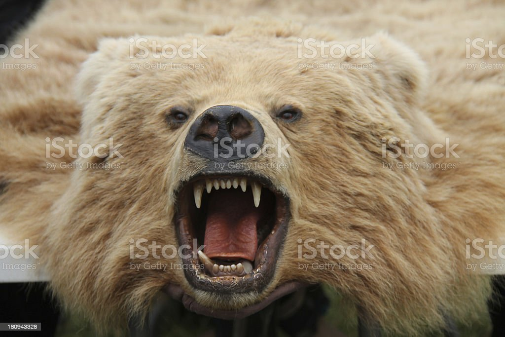 Bear Skin Rug. stock photo