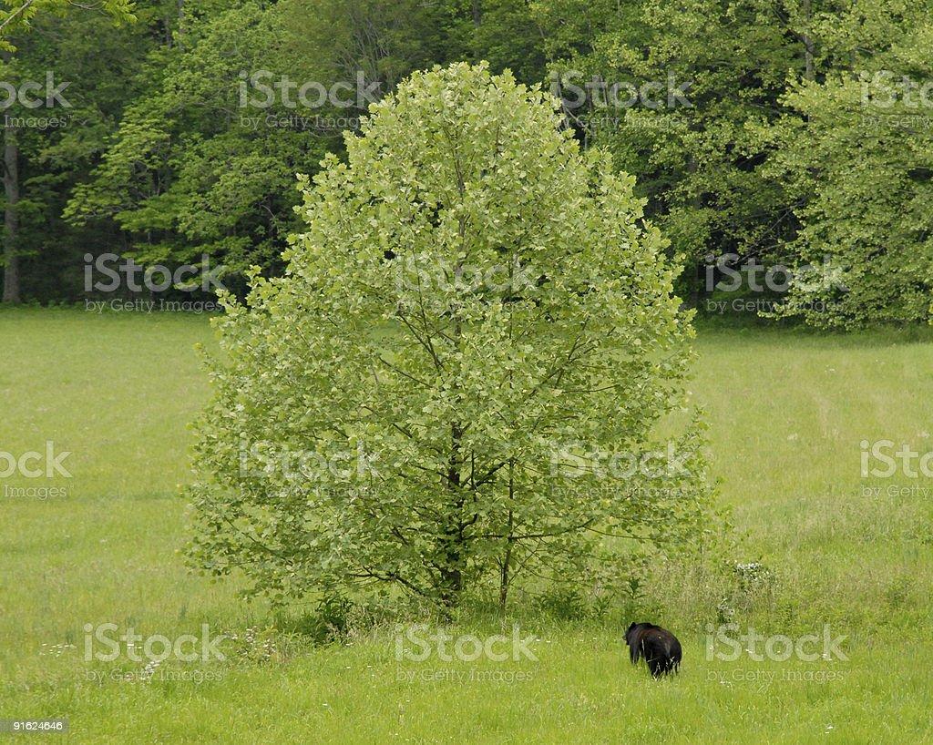 Bear tree stock photo
