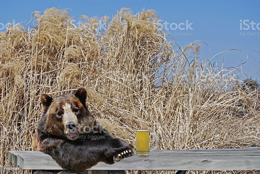 bear with beer mug stock photo