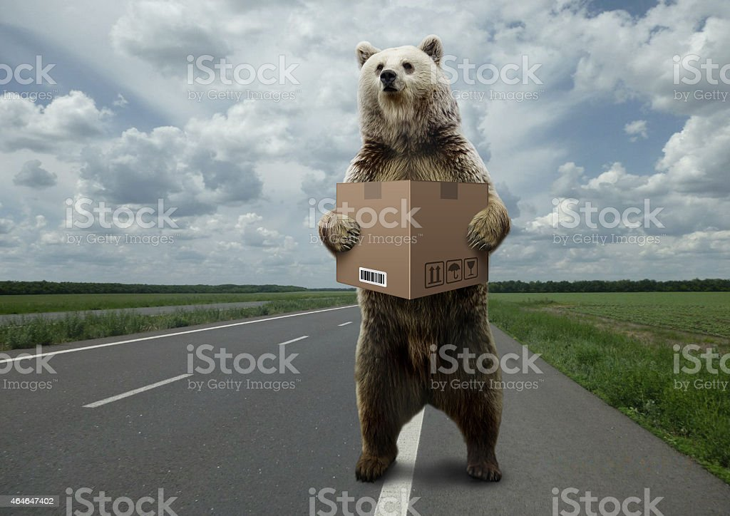 Bear with box,standing on the road. stock photo