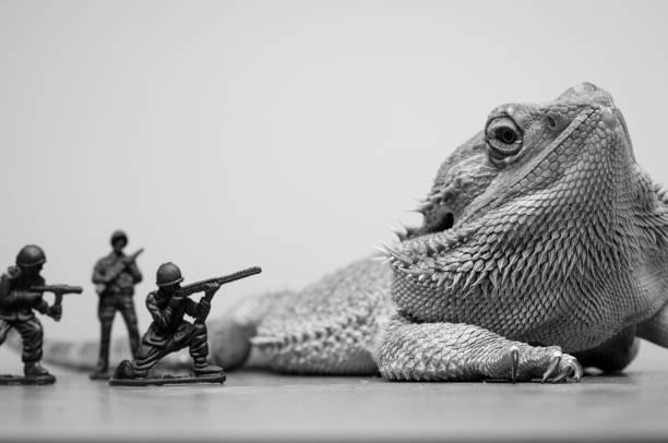 bearded dragon monster dinosaur stock photo