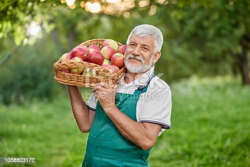 istock Bearded farmer holding basket with apples on shoulder. 1058803172