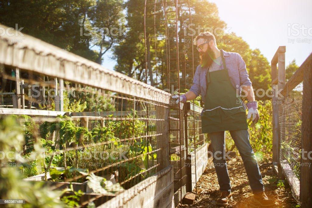 bearded man looking over communal garden royaltyfri bildbanksbilder
