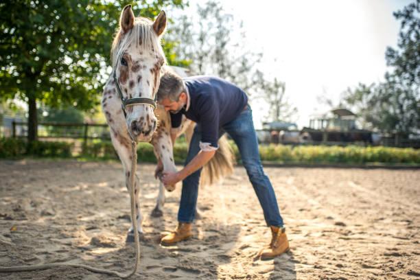 Bearded veterinarian examining knappstrupper horse picture id869695140?b=1&k=6&m=869695140&s=612x612&w=0&h=co70jke8qdghpkj3bpn elpmypgfriu sikuqa p1tw=
