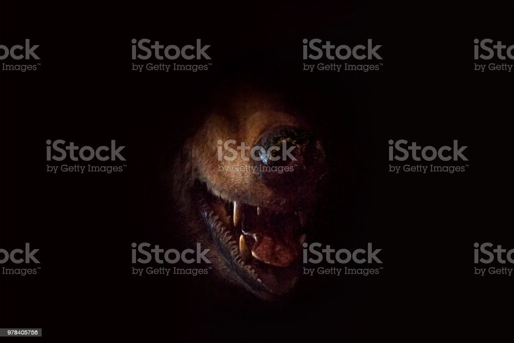 Bear's grin in darkness. stock photo