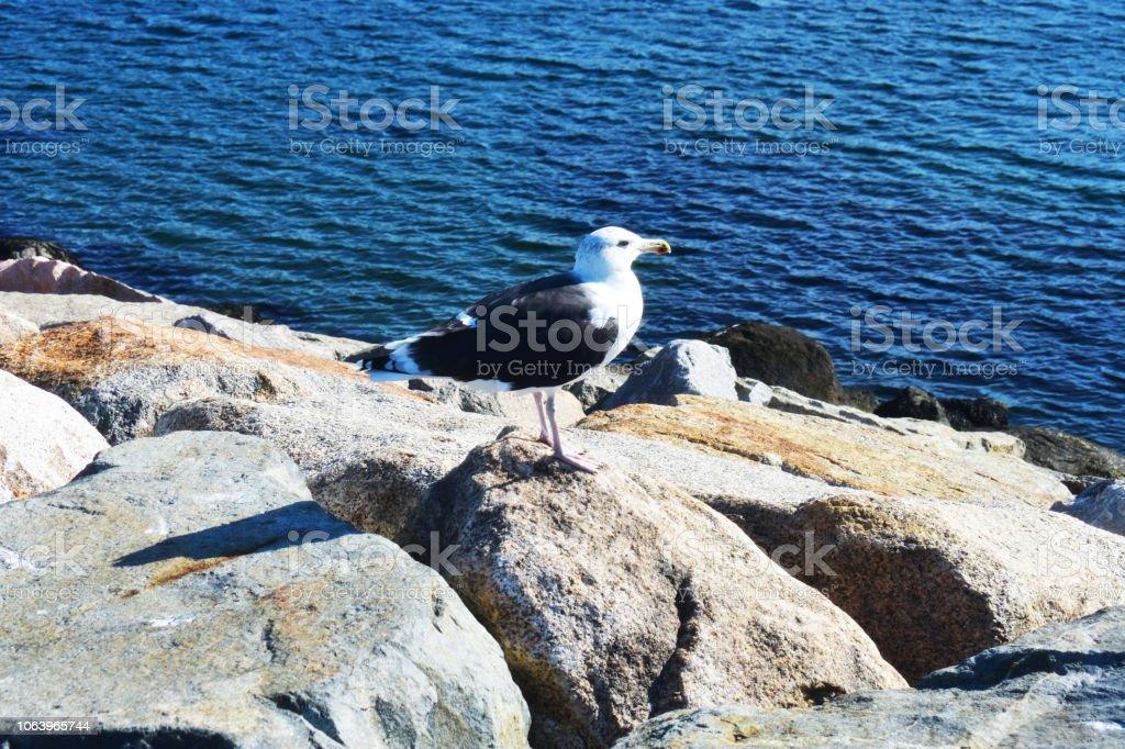 Bearskin Neck jetty, Rockport Massachusetts, USA (3) stock photo