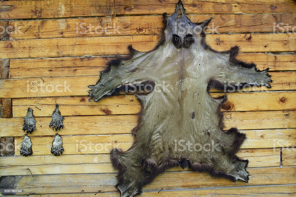 Bearskin stretched on the wall. stock photo