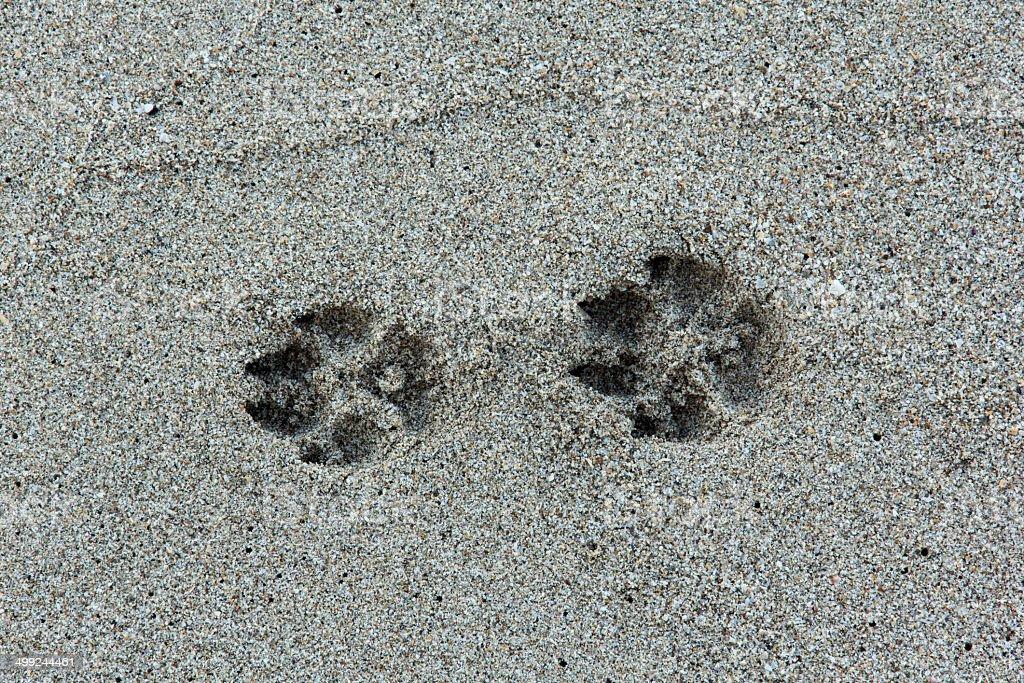 Beast footmark stock photo