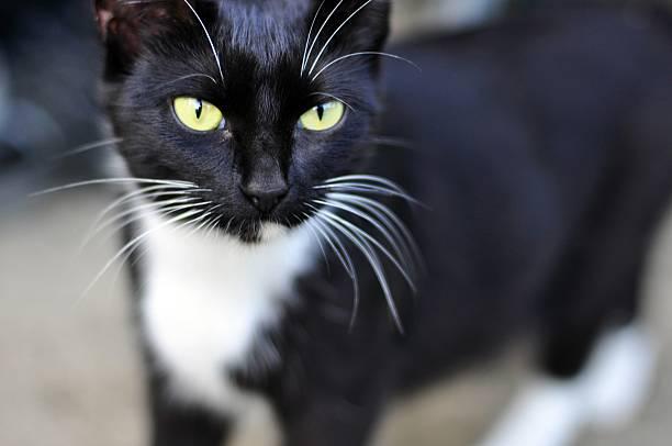 Traumhaftes Katze Porträt – Foto