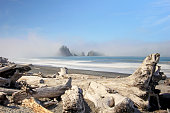 Beatiful driftwood with sea stacks in the the fog, Pacific Coast, USA