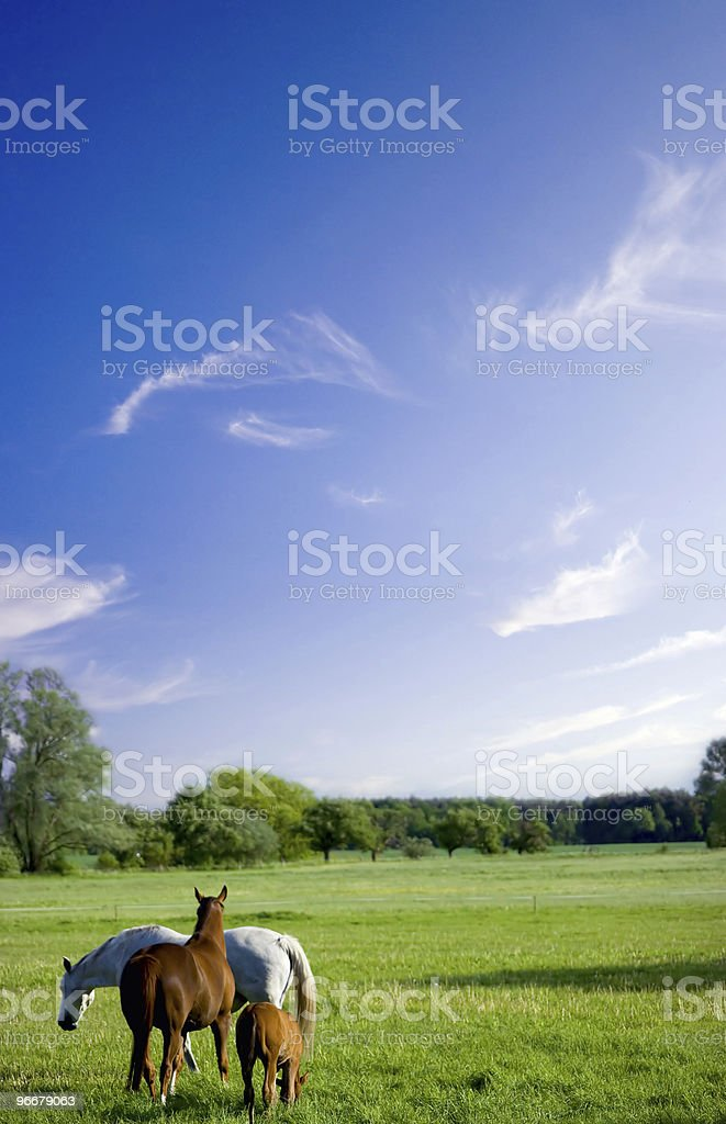Beatiful landscape with horses royalty-free stock photo