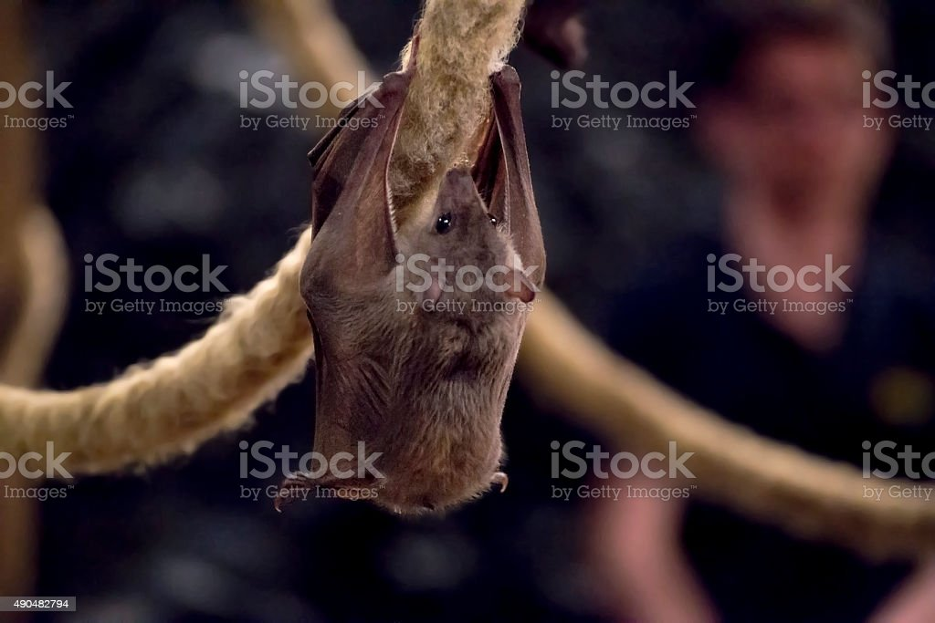 Bat stock photo