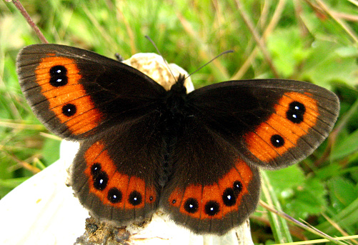 Beatutiful Butterfly In Nature Different Colors Stock ...
