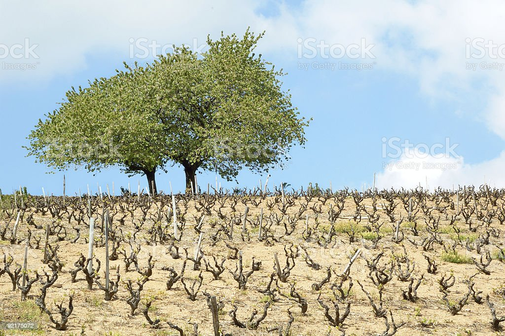 Beaujolais lanscape royalty-free stock photo