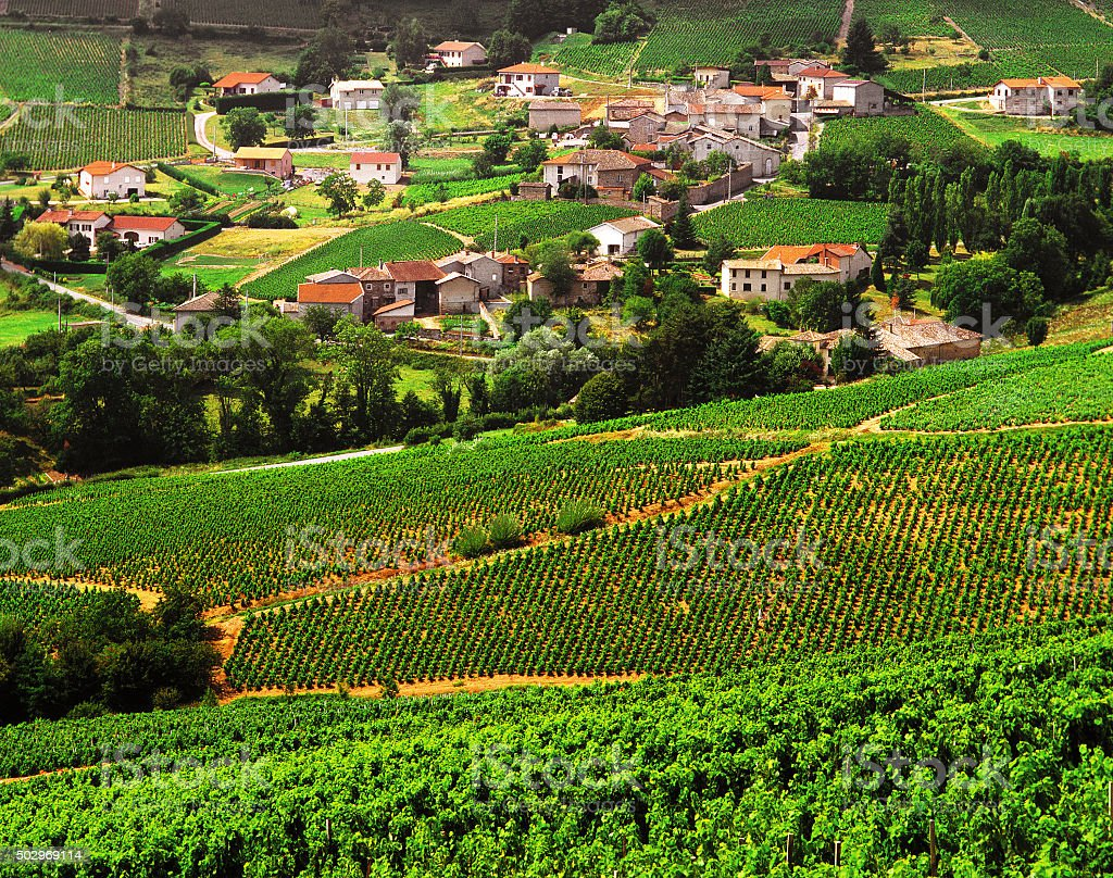 beaujolais stock photo