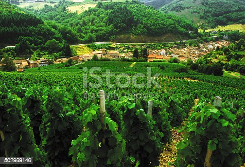 beaujolais vineyards rhone valley france