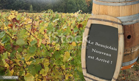 Beaujolais vineyard