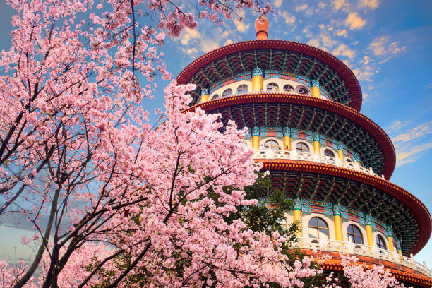 beautiflu sakura garten mit schönen himmel in taipei, taiwan - insel taiwan stock-fotos und bilder