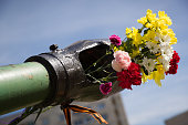 Beautifrul flowers in the barrel of the tank. May 9th. Victory day in Russia. Peace in the world. Memorial day