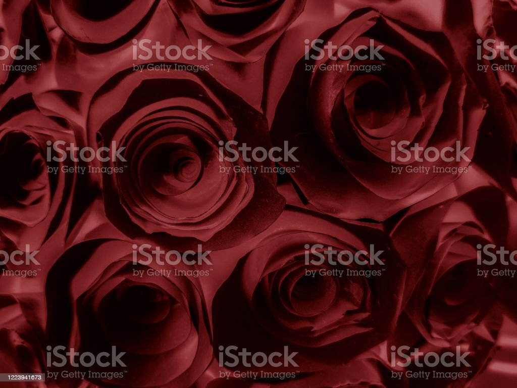 Beautiful Abstract Color Pink And Red Flowers Graphic On Black Background And Light Black And Black Flower Frame And Red Leaves Texture Dark Background Red Banner Red Background Stock Photo Download