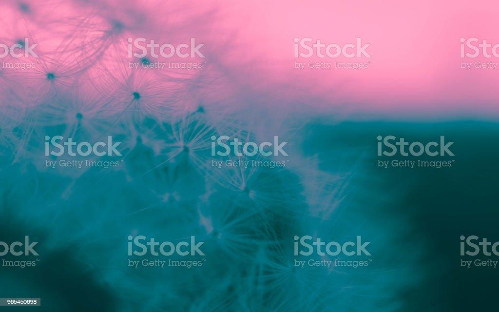Vue magnifique macro pissenlit abstraite, graines - Photo de Abstrait libre de droits
