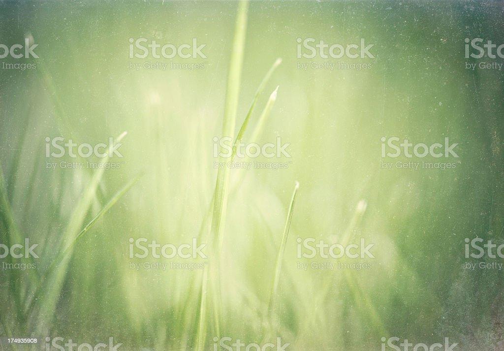 Beautiful Abstract Nature royalty-free stock photo