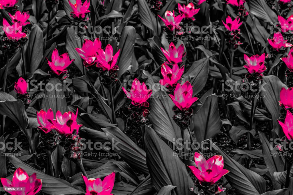 abstract black and red flower wallpaper