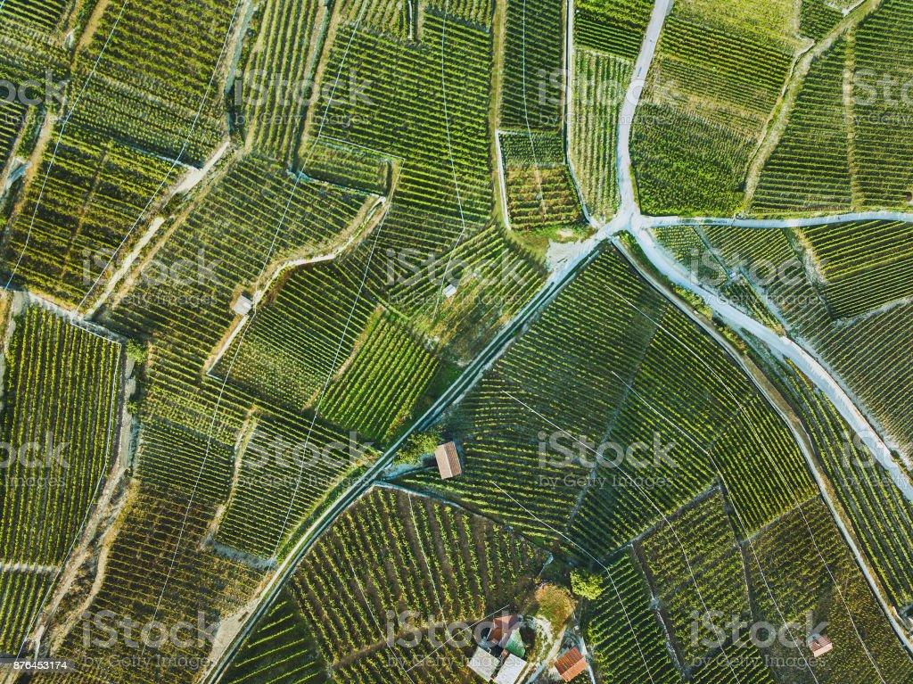 beautiful aerial landscape of wine yards stock photo
